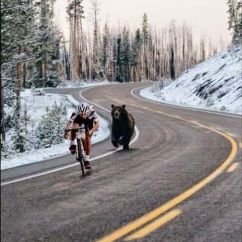 Beach Chairs On Wheels Swing For Bedrooms Bear Chasing Cyclist | Ρόδα είναι η ζωή Pinterest Cycling, Road Cycling And Bicycling