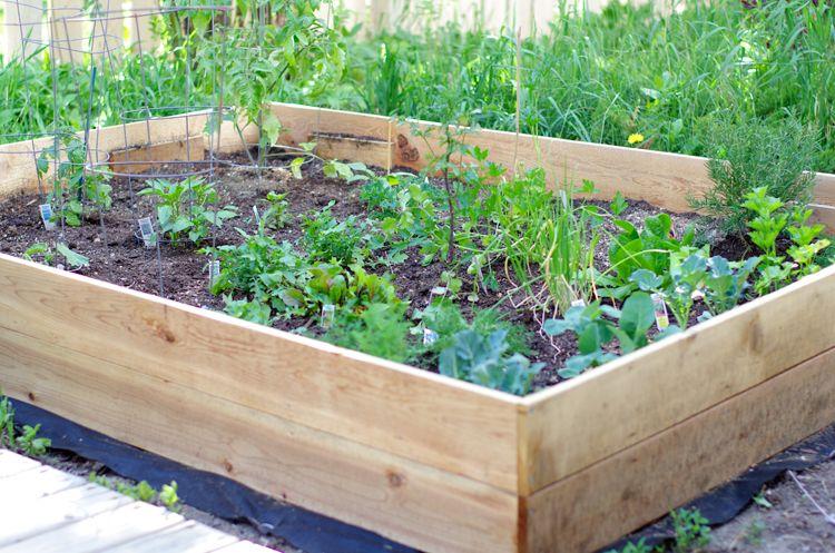 Building Vegetable Garden Box