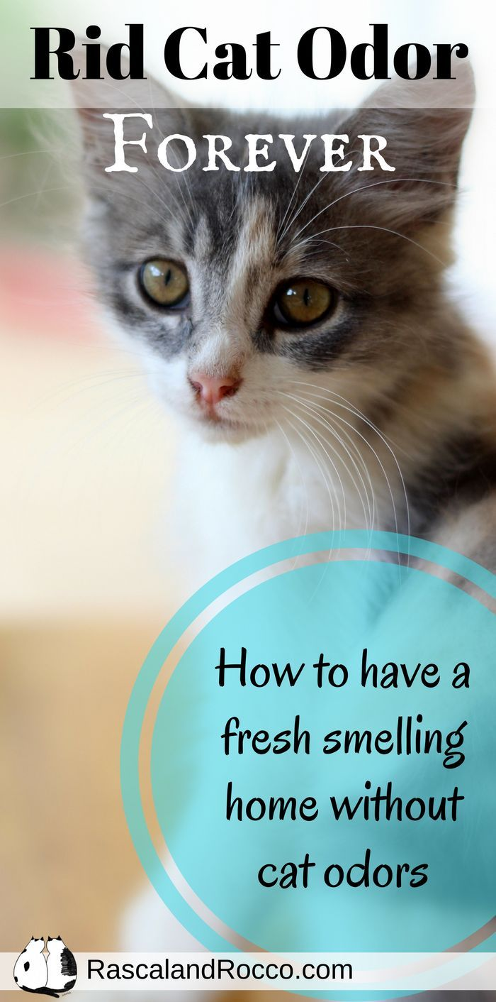 How To Get Cat Urine Smell Out Of Carpet Naturally