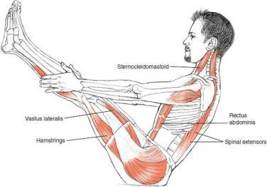 Image result for v ups anatomy