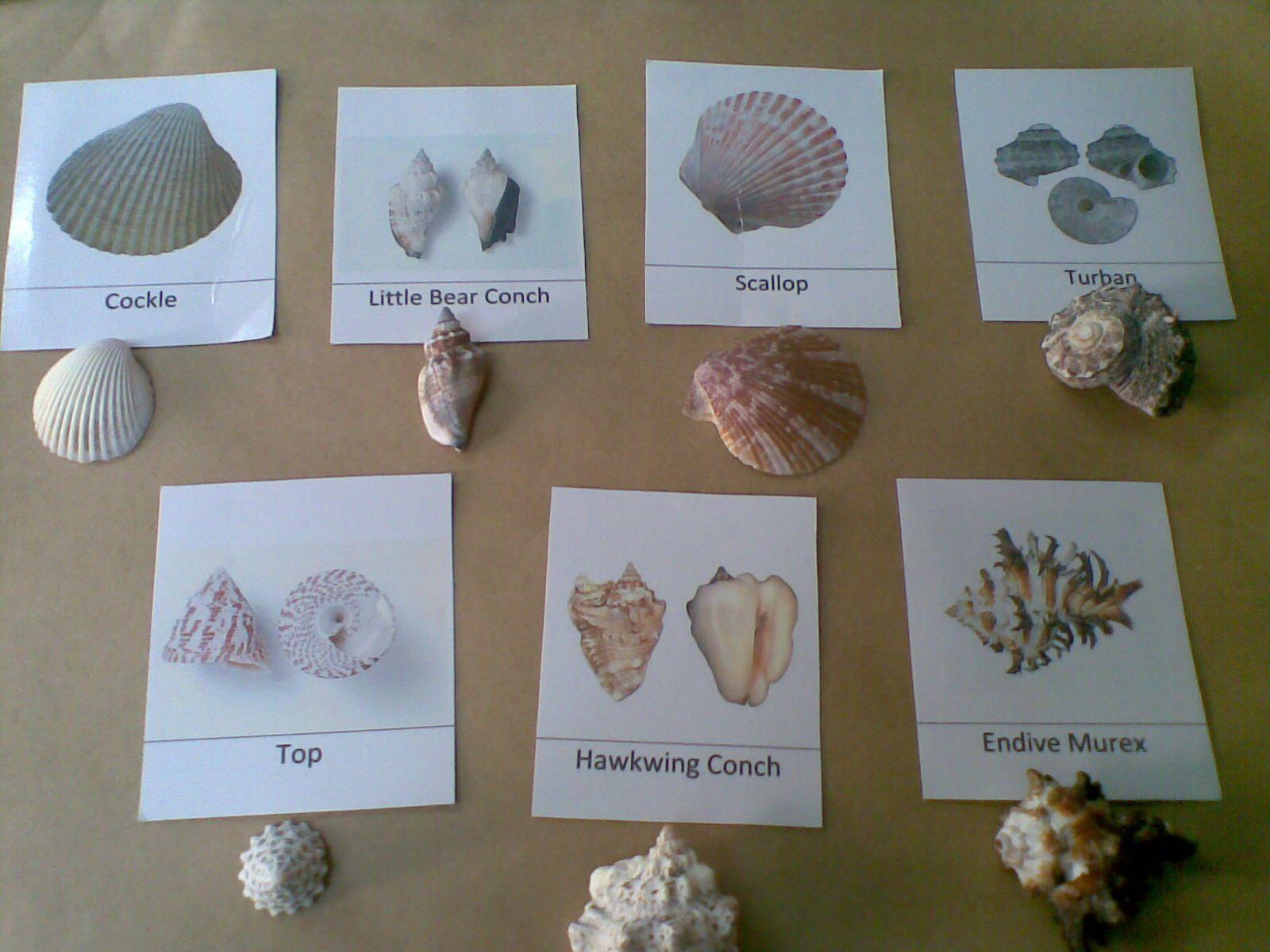 Desert Crafter Sea Shells Free Printable Homeschool