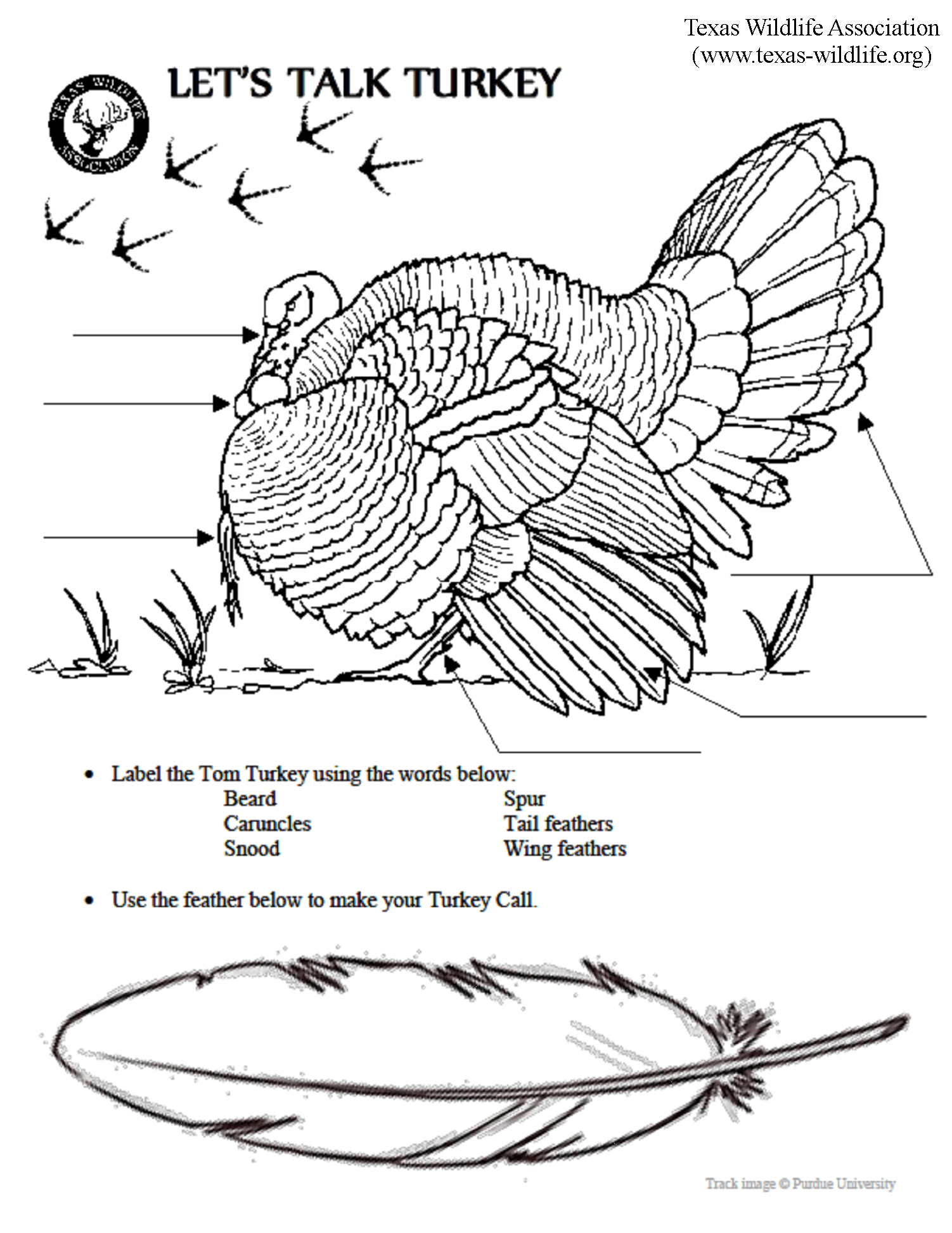Let S Talk Turkey Anatomy Page