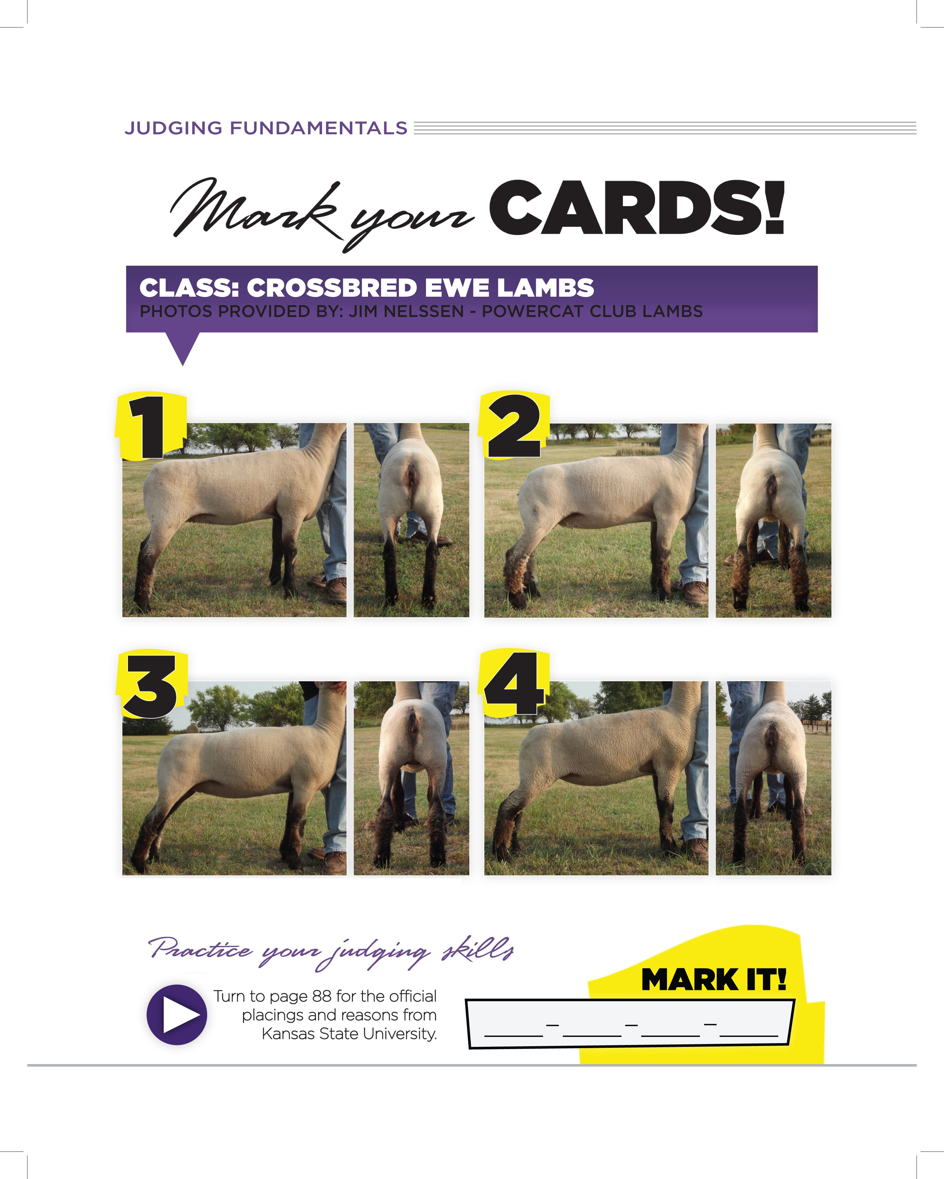 Crossbred Ewe Lambs From K State Livestock Judging Camp