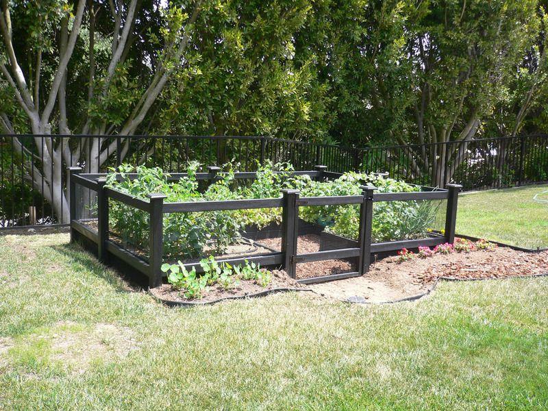 Small Vegetable Garden Design Vegetable Garden Fencing Designs