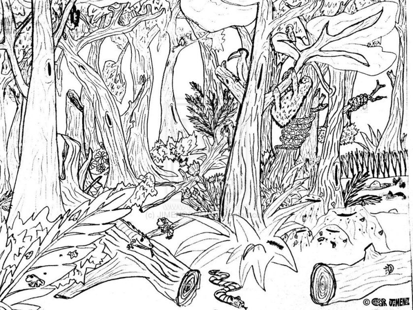 hard forest animals coloring pages  forest color pages
