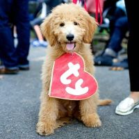 DIY TY Beanie Baby Halloween Dog Costume | DIY Dog Costume ...