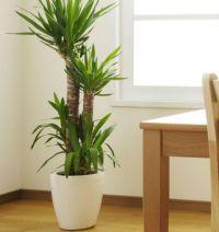 indoor plants tall | Home Decor | Pinterest | Indoor and ...