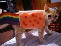Superman | Nyan cat, Pet costumes and Costumes