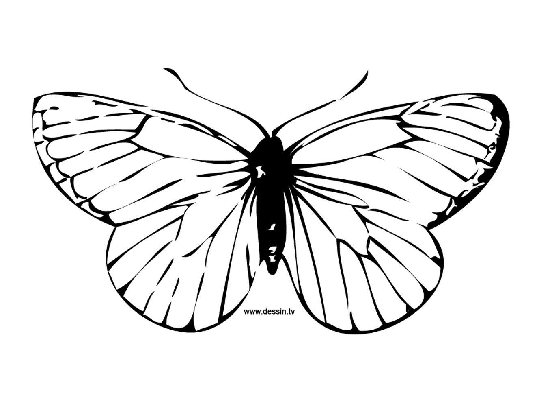 Papillon Dessin Simple Dessin Fourmi Simple Nouveau