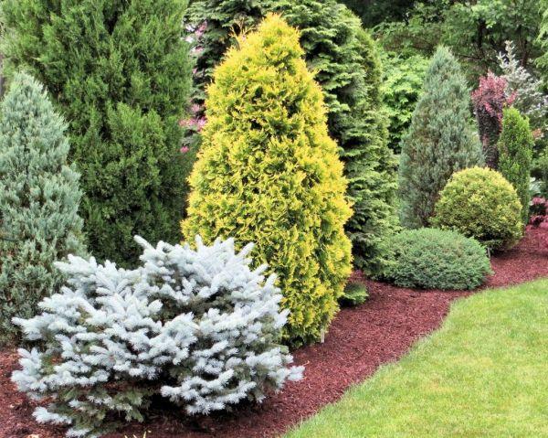 sneak of conifer garden