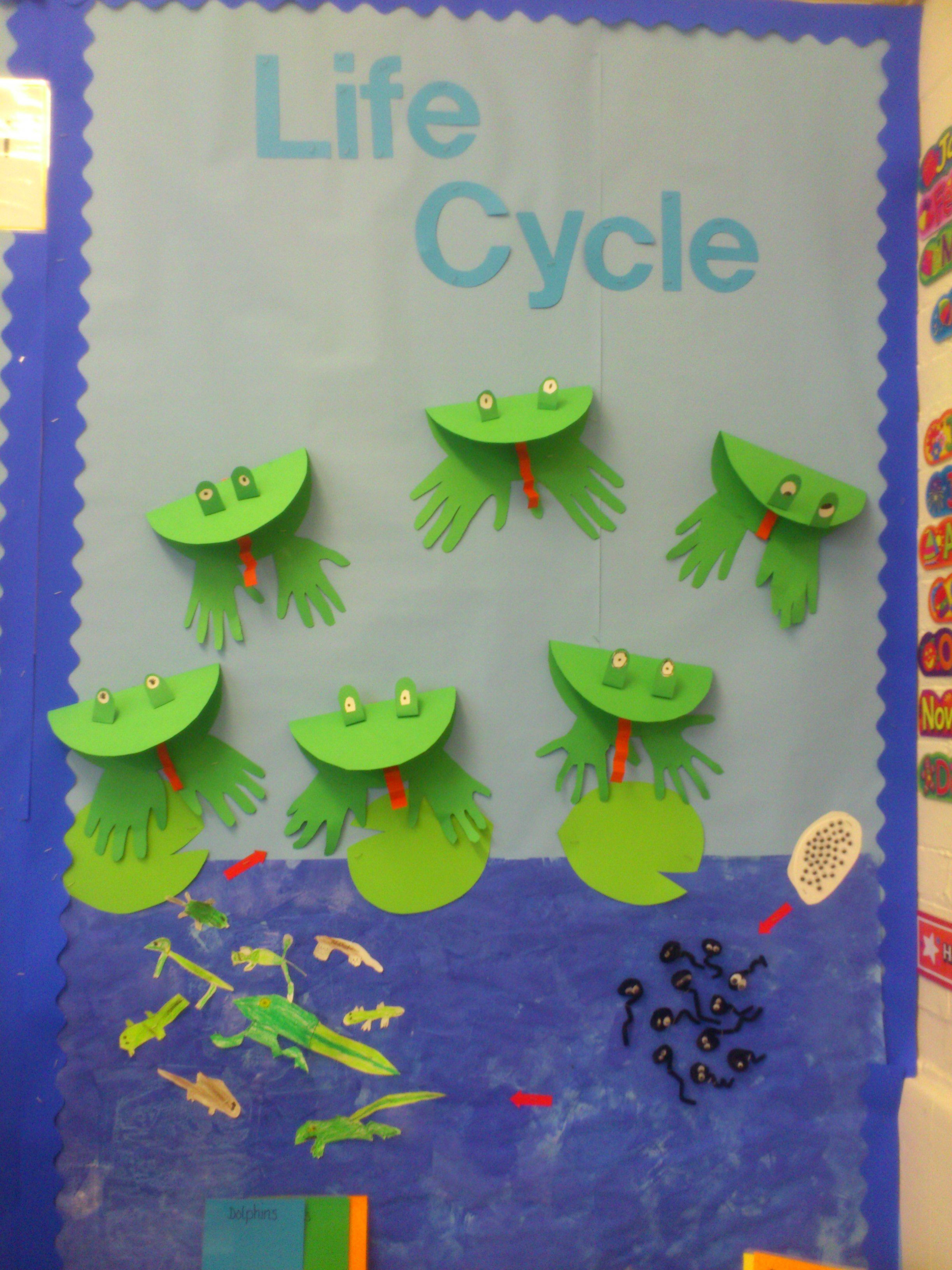 Frog Life Cycle Display From My Year 2 Class Compiled By Combining Ideas From Pinterest