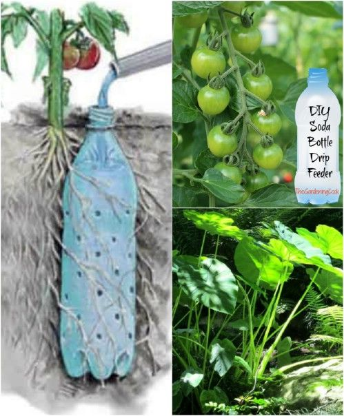 100 Expert Gardening Tips Ideas And Projects That Every Gardener