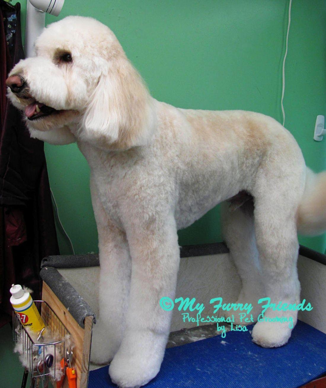 Grooming doodles dog grooming pinterest doodles