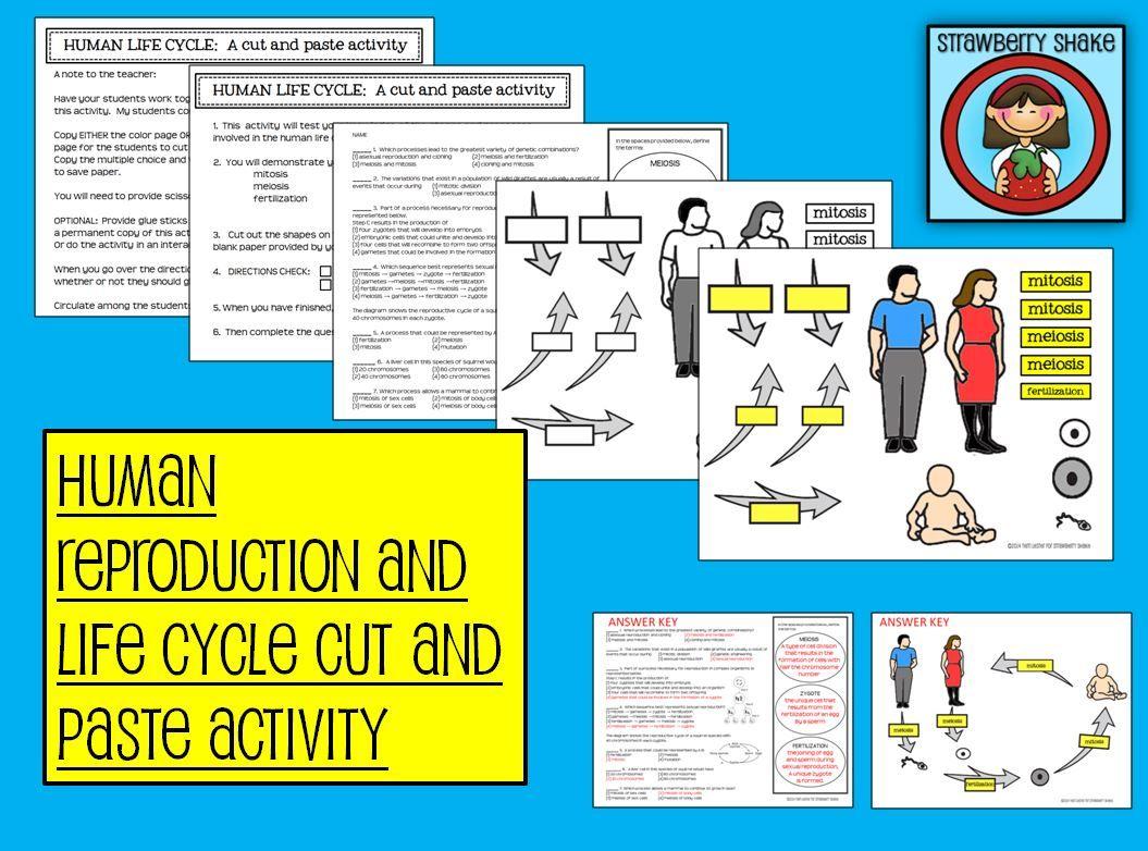 A Human Life Cycle Cut And Paste Activity Mitosis