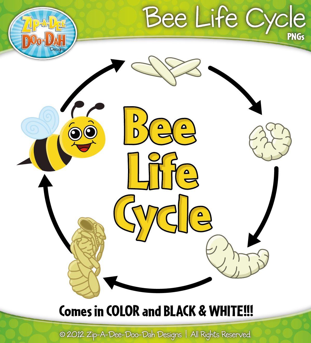 Bee Life Cycle Clipart Zip A Dee Doo Dah Designs