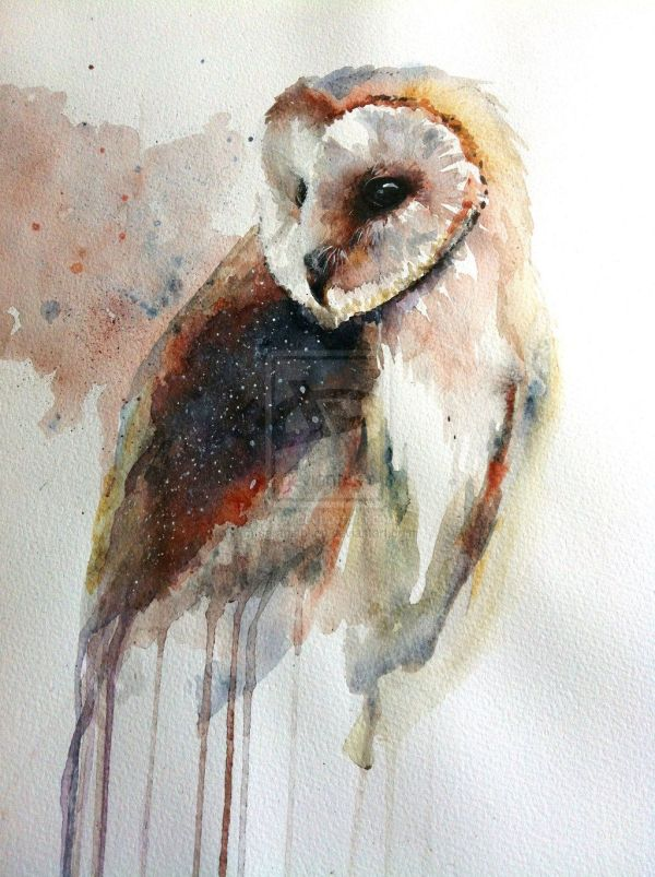 Barn Owl Watercolor Paintings