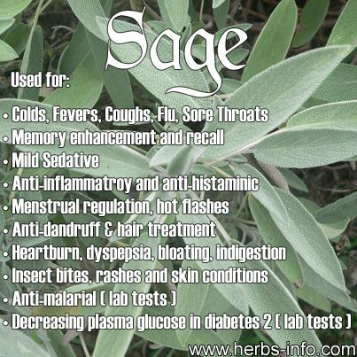Sage: The Must-Grow Plant (Find Out How & Why To Use It ...