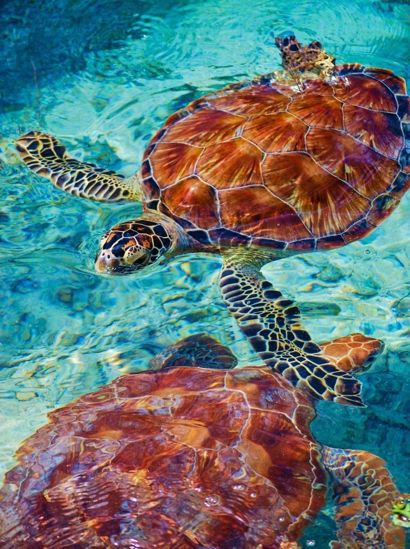 best 25 sea life art ideas on pinterest
