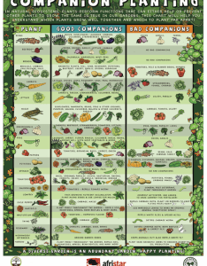Vegetable gardening chart it shows what veggies grow go well together xd also rh pinterest