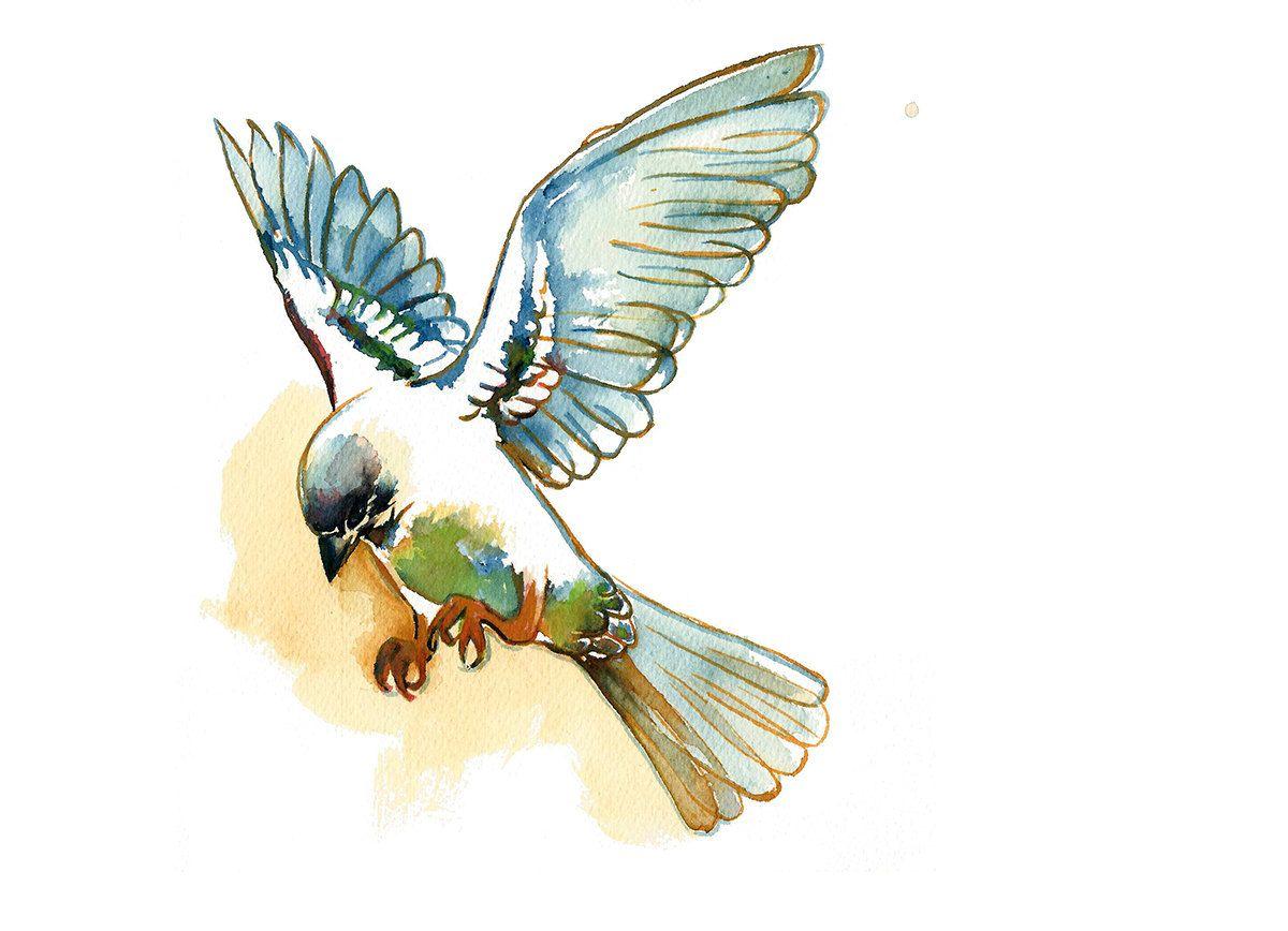 Original Watercolor Painting Sparrow Print Flying Sparrow