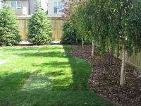 Best Backyard Tree Ideas On Pictures Of Houses And Play ...