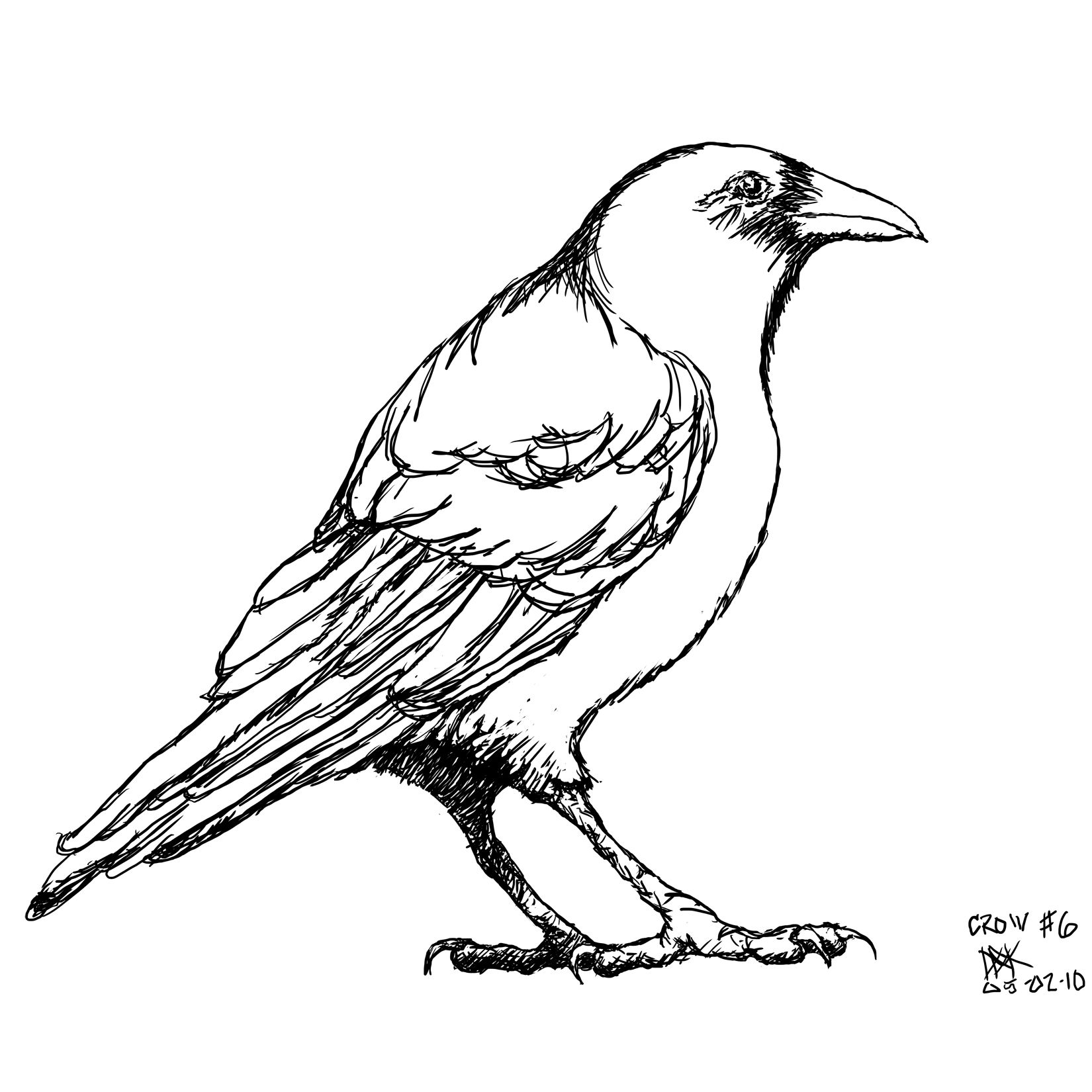 Crow6sm