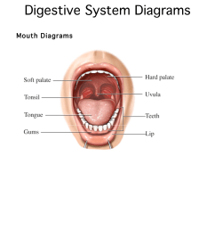 simple diagram of the salivary gland [ 1275 x 1650 Pixel ]