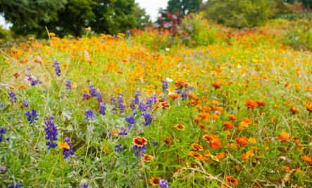 Beautiful Wildflower Gardens How To Grow Gardening