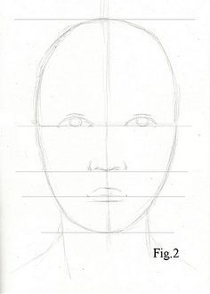 Drawing lesson for Beginner artists: Proportions of the
