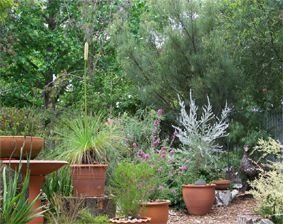 Australian Native Plants In Pots In A Small Suburban Garden