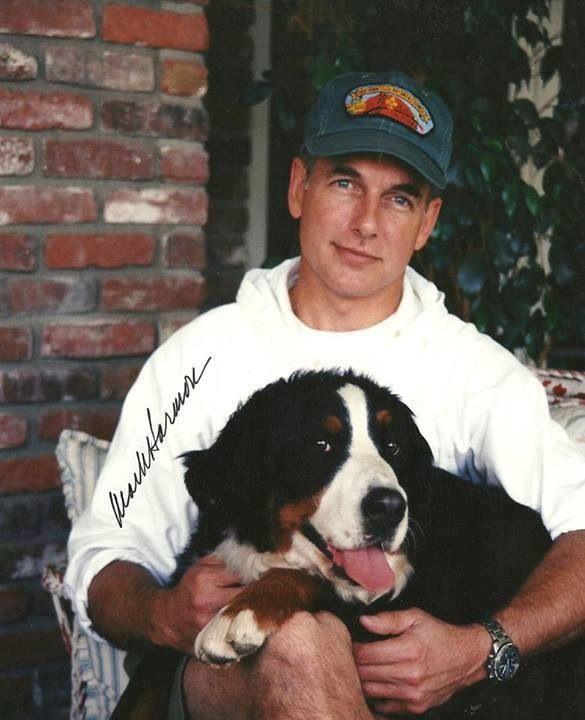Mark Harmon Dogs Amp Their Best Friends
