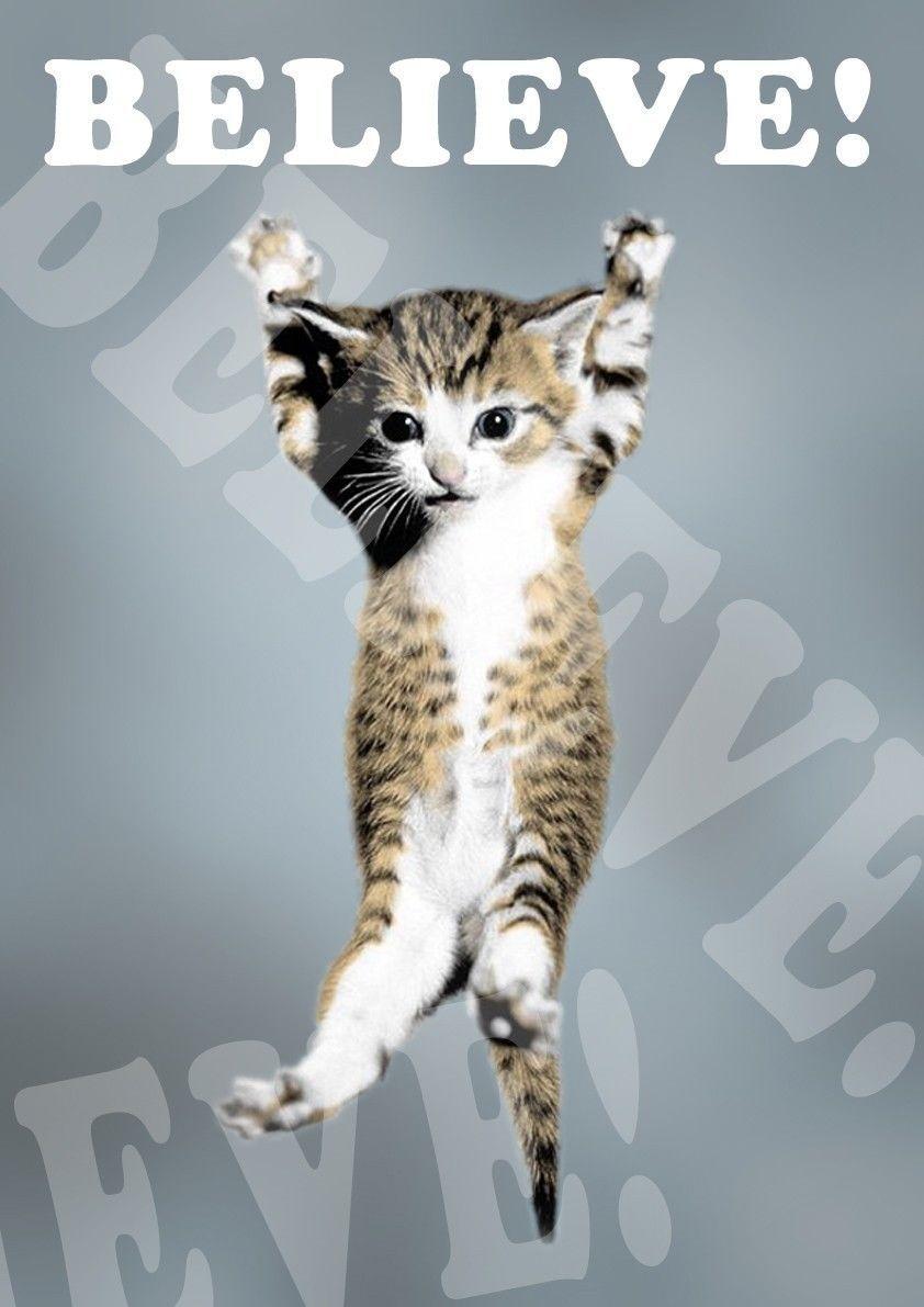 Cats Wallpaper Cute Babies