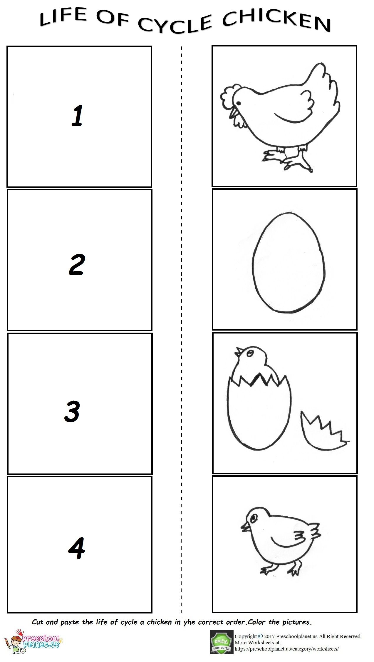 Cycle Of A Chicken Worksheet