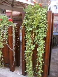 Vertical Vegetable Gardening Ideas | vertical wall garden ...