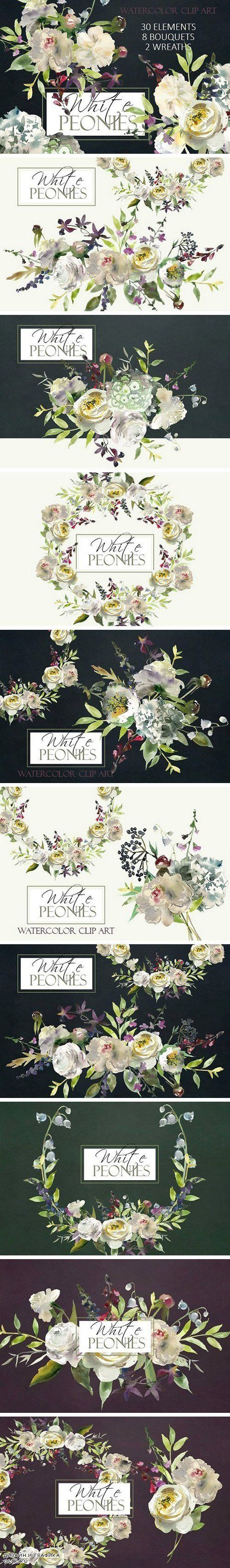 hight resolution of watercolor white flowers clipart 983330