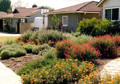 California Drought Resistant Landscaping Ideas