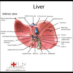 Where Is My Liver Located Diagram Smoke Detector Wiring Pin By Patient Education On Pinterest