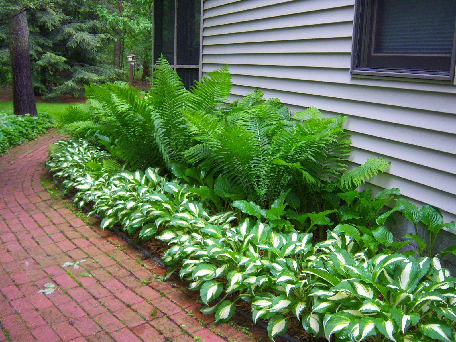399 Best Images About Hostas And Ferns II On Pinterest Garden