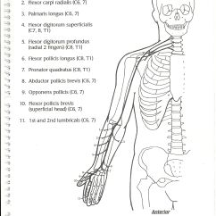 Ulnar Nerve Diagram Pickup Wiring Seymour Duncan Median Nbcot Pinterest Therapy