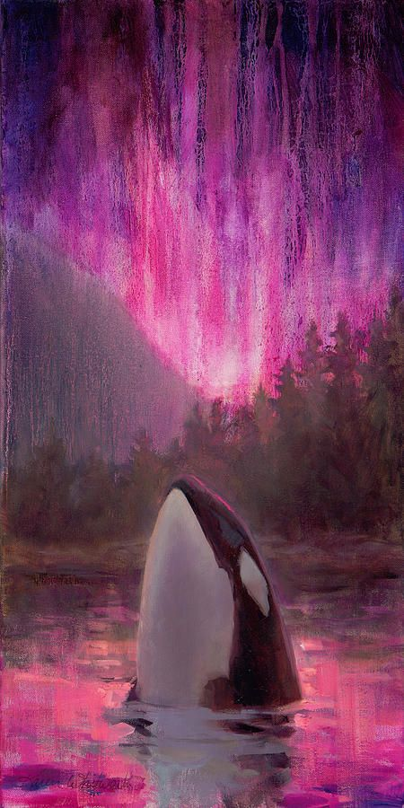 Killer Whales Lights Northern And
