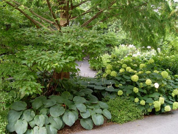 landscaping ideas shady patio