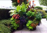 Tropical Landscape/Yard with Red Futurity Canna Lily