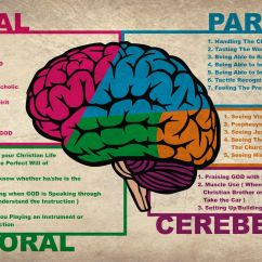 Brain Structures And Functions Diagram Worksheet Tool To Create Er Anatomy Pictures Of A Christian By