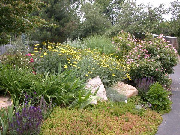 water saving landscape