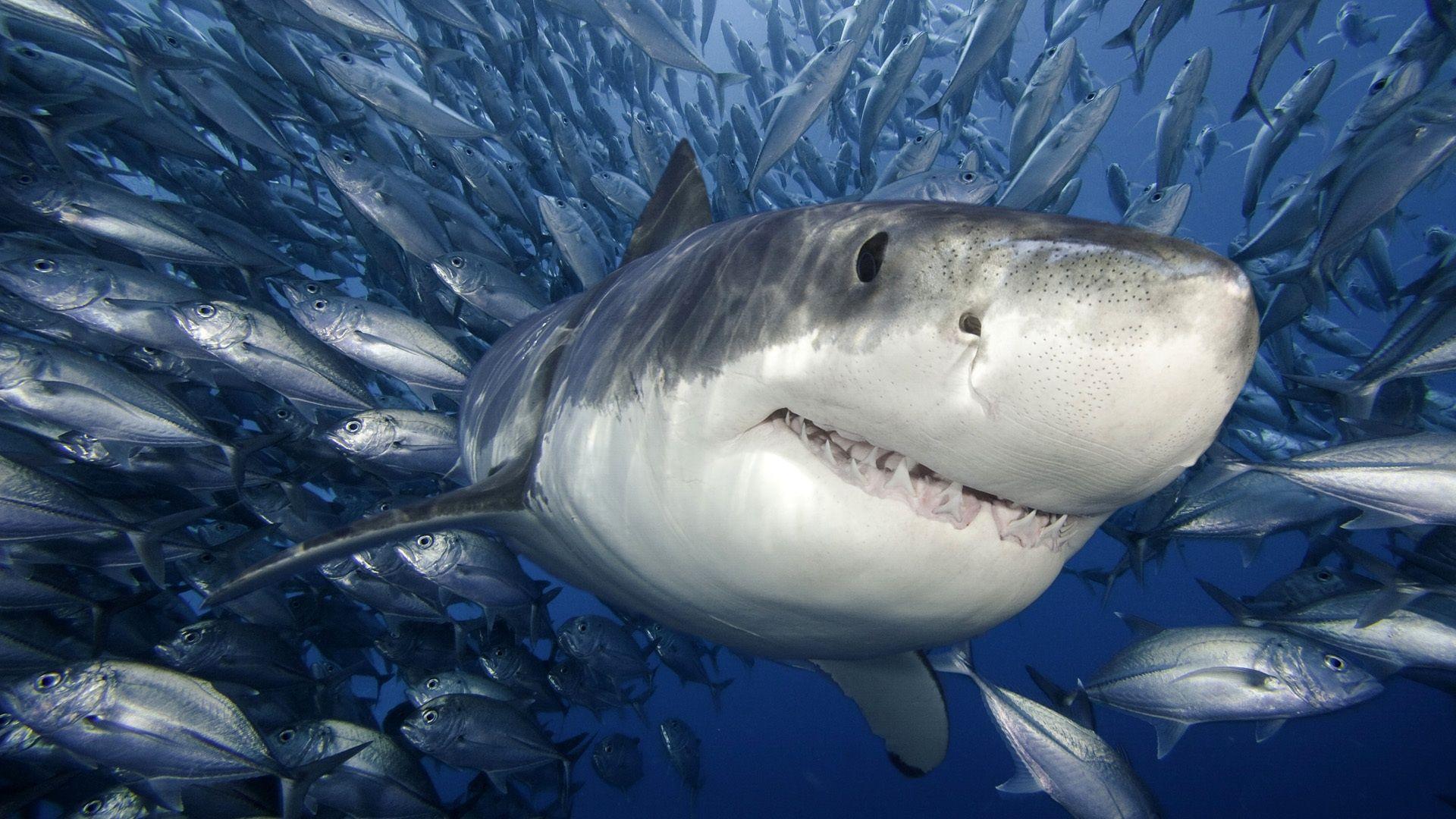 shark wallpaper bedroom | hd wallpaper | pinterest | shark
