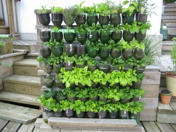 Plastic Bottle Green House Google 検索 Gardening Pinterest