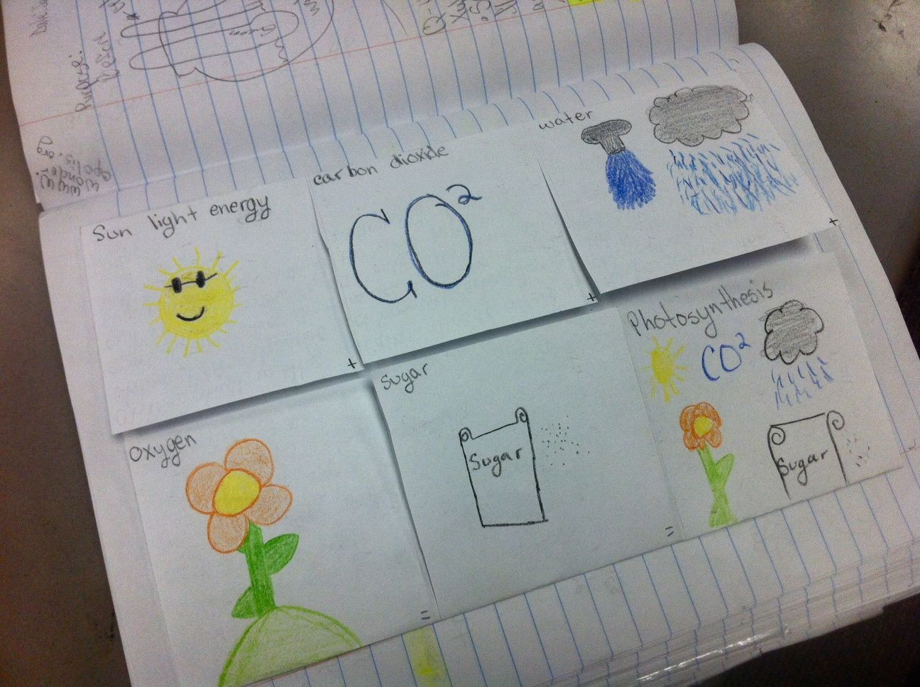 Great Science Ideas I Made This Photosynthesis Foldable