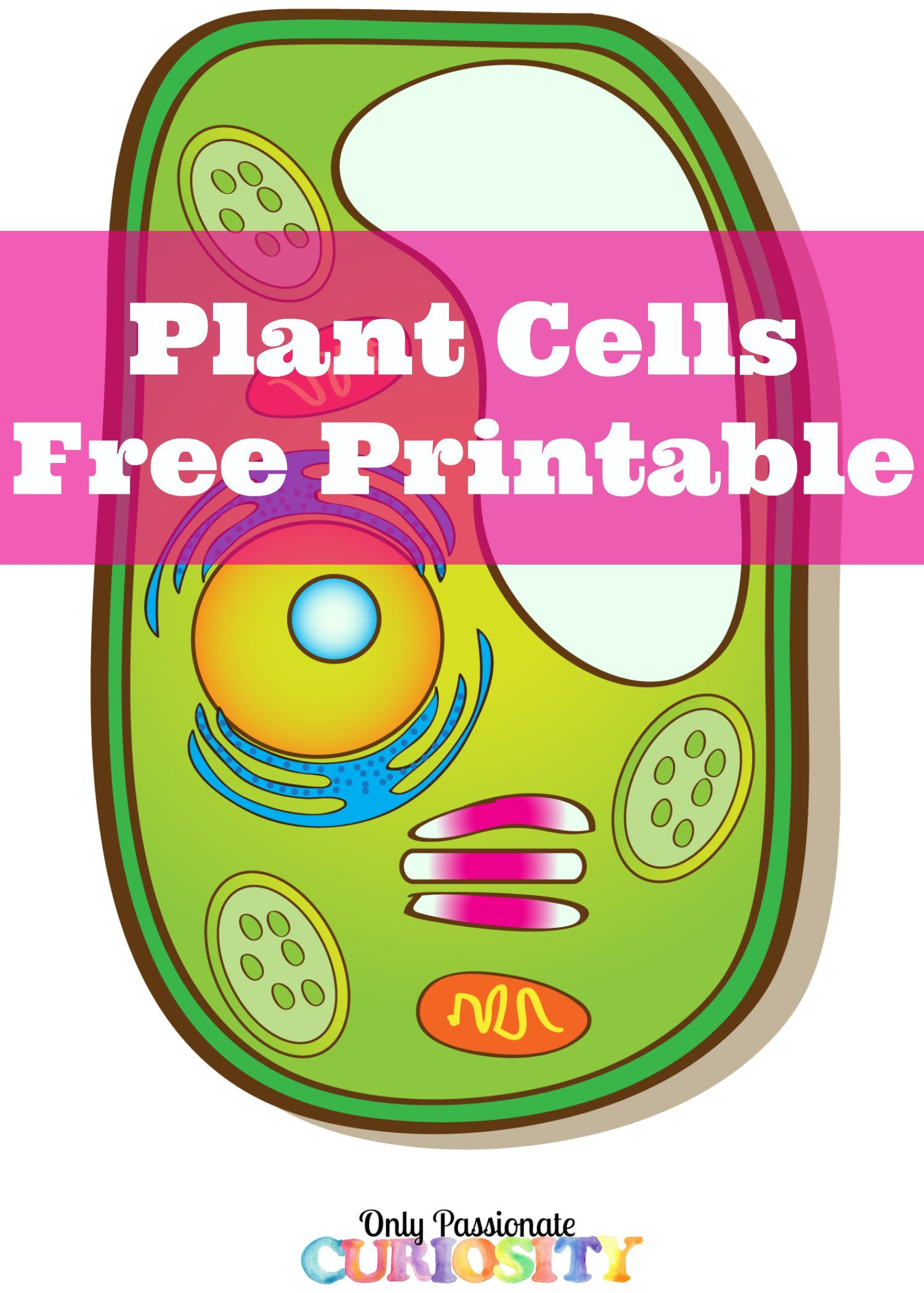 Plant Cells Printable Pack