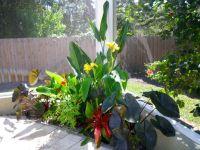 Tropical Pool Landscaping   Tropical poolside landscape ...