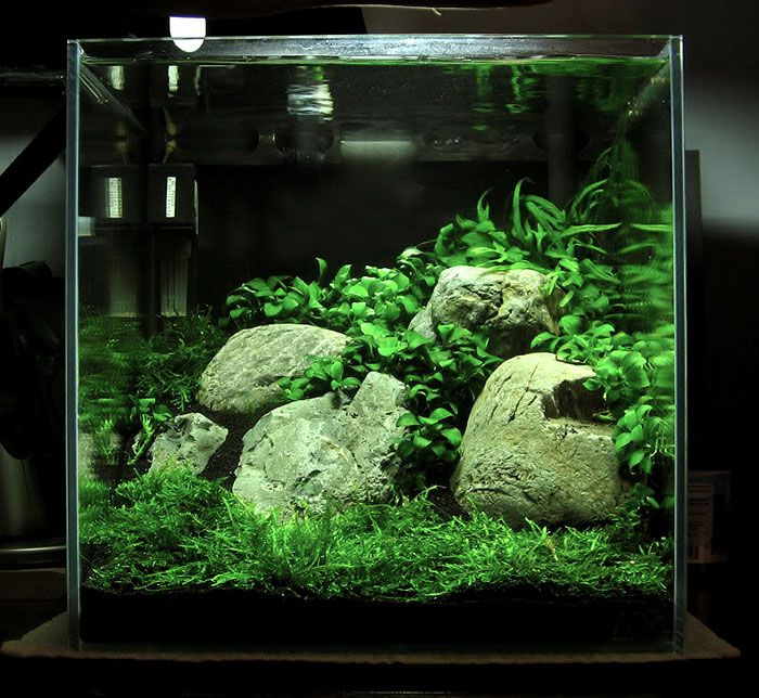 Nano Planted Shrimp Tank For Love Of Animals Pinterest